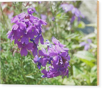 Purple Phlox Wood Print