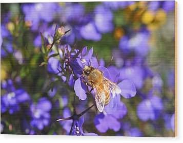 Purple Pollination  Wood Print by Crystal Hoeveler