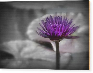 Purple Pond Lily Wood Print by Lynn Sprowl