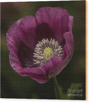 Wood Print featuring the photograph Purple Poppy by Vicki DeVico