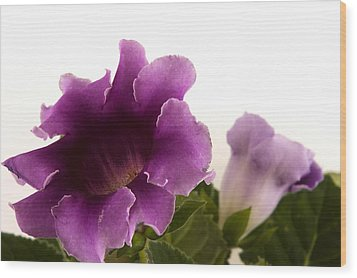 Wood Print featuring the photograph Purple Power by Robert Culver