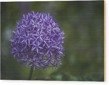 Purple Puff Wood Print