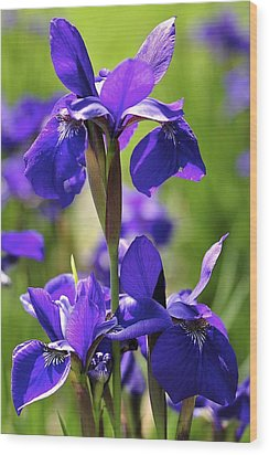 Wood Print featuring the photograph Purple Reign by Sandy Molinaro