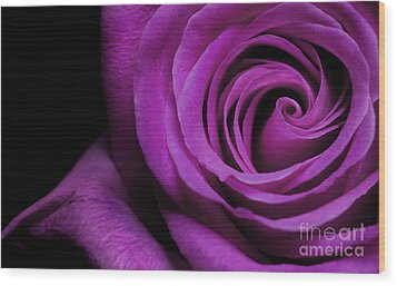 Purple Roses Closeup Wood Print by Boon Mee