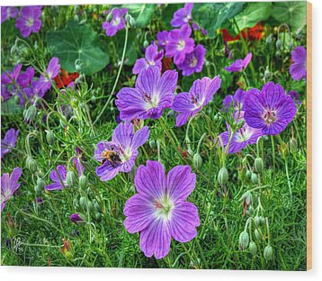 Purple Rozanne Geraniums 002 Wood Print by Lance Vaughn