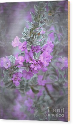 Purple Sage Wood Print