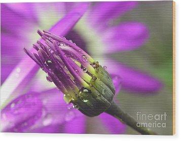 Purple Senetti II Wood Print by Cate Schafer