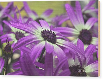 Purple Senetti Iv Wood Print by Cate Schafer