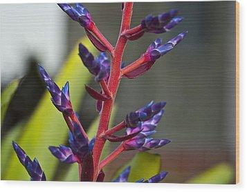 Purple Spike Bromeliad Wood Print by Sharon Cummings