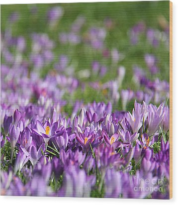 Purple Spring Wood Print by Karin Ubeleis-Jones