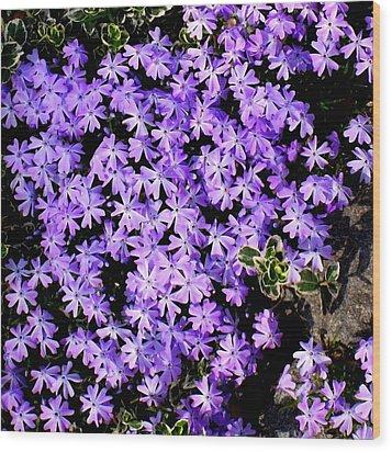 'purple Springtime' Wood Print