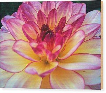 Purple Star Flower Wood Print by Beril Sirmacek