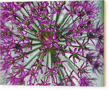 Wood Print featuring the photograph Purple Starlight by Aimee L Maher Photography and Art Visit ALMGallerydotcom