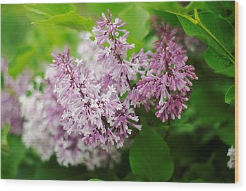 Wood Print featuring the photograph Purple Syringa Flowers by Suzanne Powers