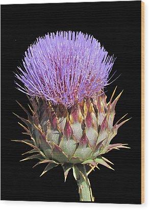 Purple Thistle Wood Print by Bonnie Muir