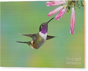 Purple-throated Woodstar Wood Print by Anthony Mercieca