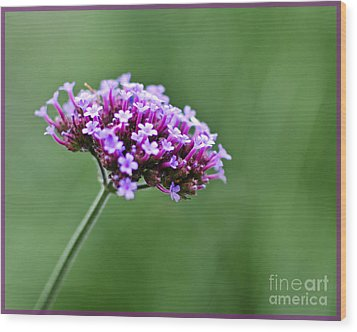 Wood Print featuring the photograph Purple Top Flower by Maria Janicki