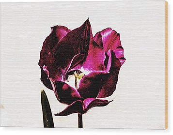 Wood Print featuring the photograph Purple Tulip by Angela DeFrias