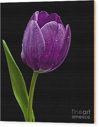 Wood Print featuring the photograph Purple Tulip by Shirley Mangini