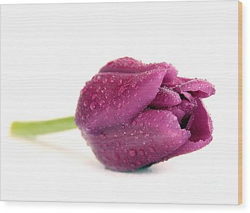 Purple Tulips  Flower Wood Print by Boon Mee
