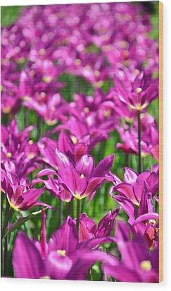 Purple Tulips Wood Print by Gynt