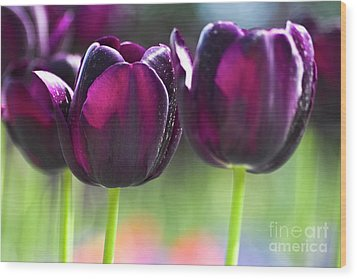 Purple Tulips Wood Print by Heiko Koehrer-Wagner