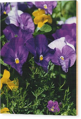 Purple Violas Wood Print