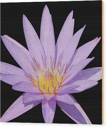 Purple Water Lily Wood Print by Kim Hojnacki