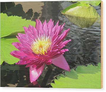Wood Print featuring the photograph Purple Water Lily by Richard Reeve
