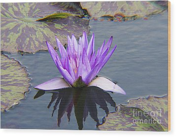 Purple Water Lily With Lily Pads One Wood Print
