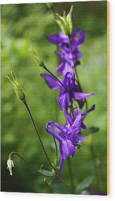 Purple Wildflower At Bernese Oberland Switzerland Wood Print by Jetson Nguyen
