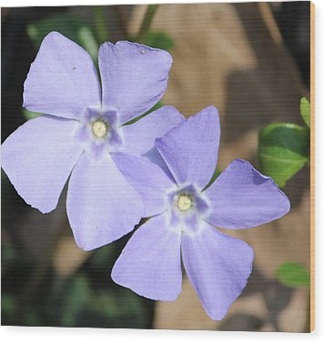 Purple Wildflowers Wood Print
