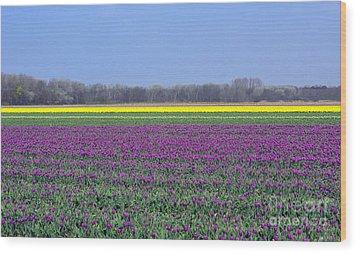 Purple With Golden Lining. Fields Of Tulips Series Wood Print by Ausra Huntington nee Paulauskaite
