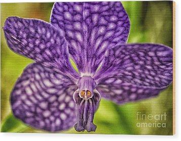Purple Wonder Wood Print