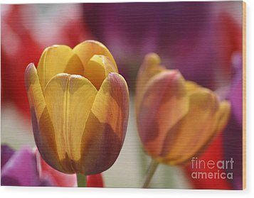 Purpleyellowtulips7016 Wood Print by Gary Gingrich Galleries