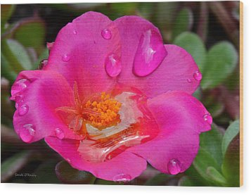 Purslane Flower In The Rain Wood Print by Sandi OReilly