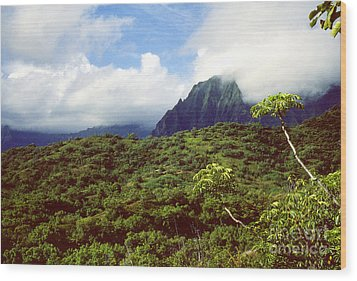 Puu Piei Trail Koolau Mountains Wood Print by Thomas R Fletcher