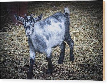 Pygmy Goat Wood Print by Anthony Thomas