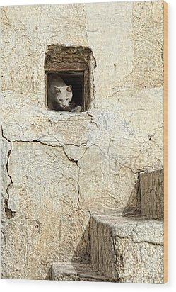 Qatari Alley Cat Wood Print