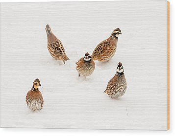Quail Guard Duty Wood Print