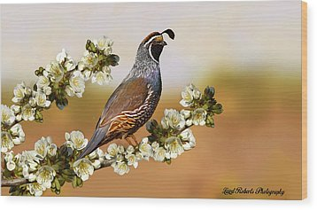 Quail In Cherry Tree Wood Print by Laird Roberts