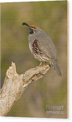 Quail On A Stick Wood Print by Bryan Keil