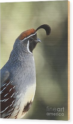 Quail Portrait Wood Print by Bryan Keil