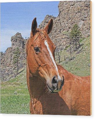 Quarter Horse Portrait Montana Wood Print by Jennie Marie Schell