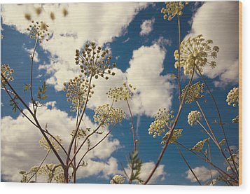 Queen Anne Lace And Sky I Wood Print by Jenny Rainbow