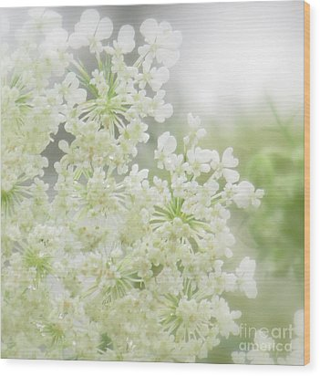 Queen  Anne Lace Wood Print by France Laliberte