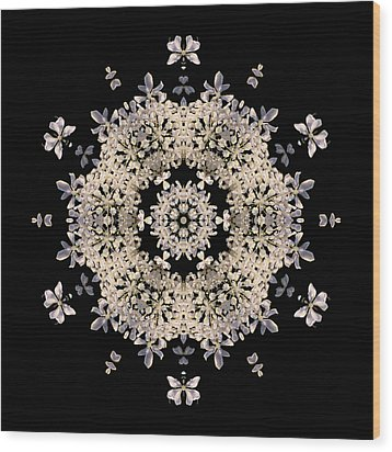 Queen Anne's Lace Flower Mandala Wood Print by David J Bookbinder