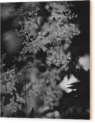 Queen Anne's Lace Wood Print by Jp Grace