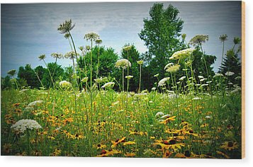 Queen Annes Lace Of The Butterfly Gardens Of Wisconsin Wood Print by Carol Toepke