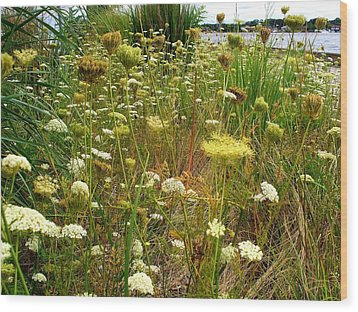 Queen Anne's  Lace Riverfront  Wood Print by Rick Todaro